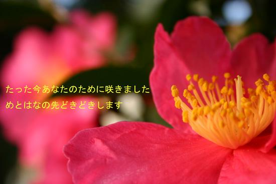 honshin